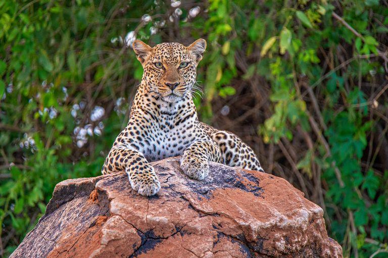Dovolenka Safari
