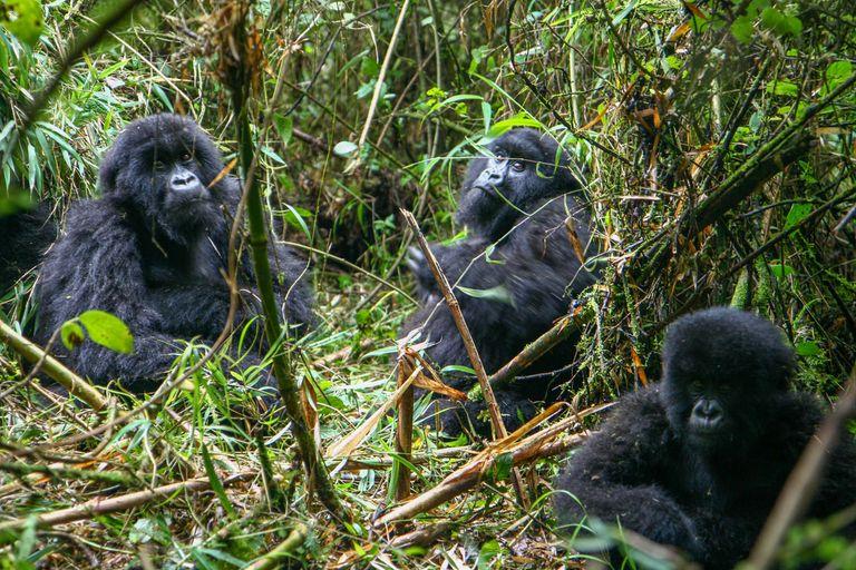 Dovolenka Kilimandžáro a gorily