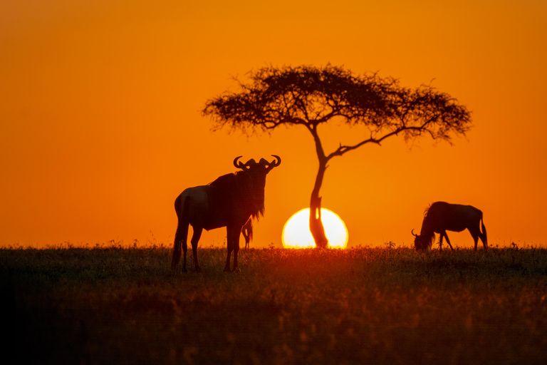 Dovolenka Keňa, Tanzánia, Zanzibar