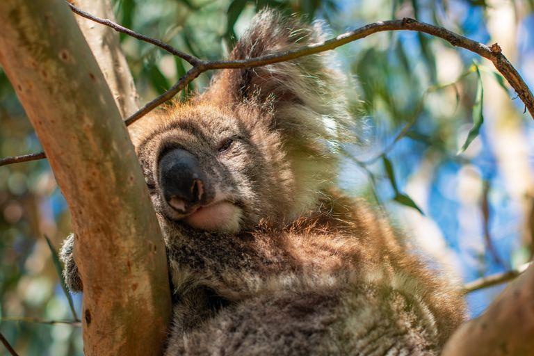 Nový Zéland, Austrália
