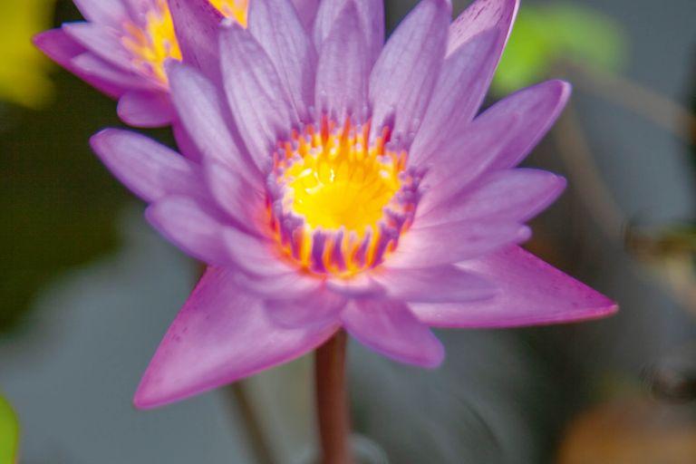 Dovolenka Srí Lanka - rajská záhrada