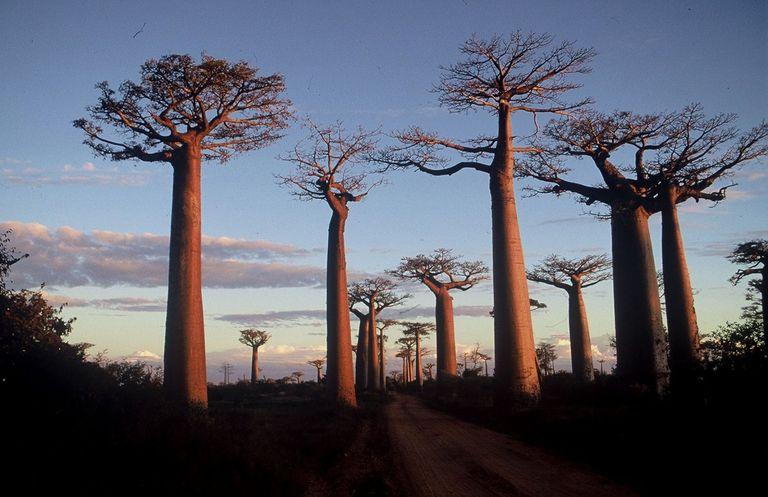 Dovolenka Valentín na Madagaskare - rande so slovenským veľkokráľom