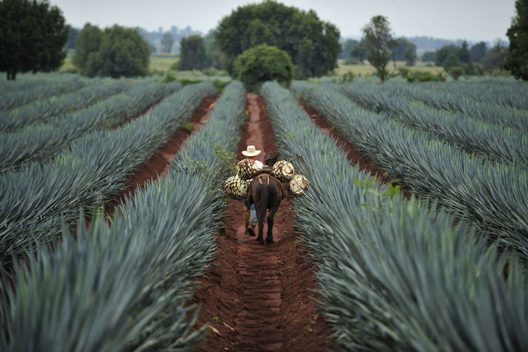 Dovolenka Mexiko - all inclusive 16 dní