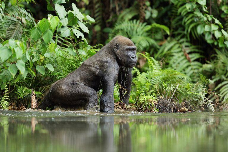 Rovníková Afrika - Veľký okruh