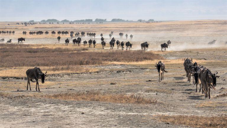 Dovolenka Kilimandžáro a safari s Martinom Karnišom