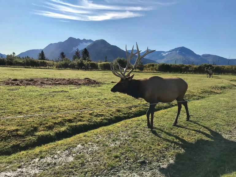 Anchorage – brána k aljašským dobrodružstvám