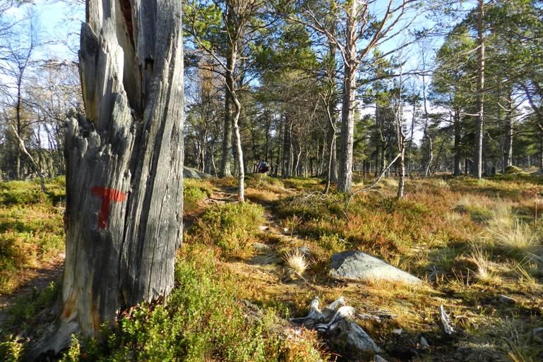 Divoká Škandinávia - Národný park Femundsmarka