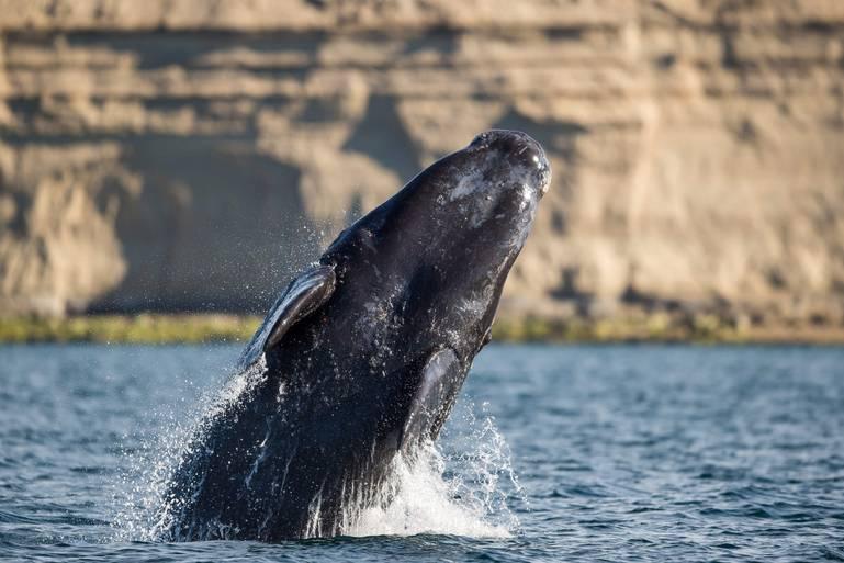 10 najlepších miest na pozorovanie veľrýb v Európe aj vo svete