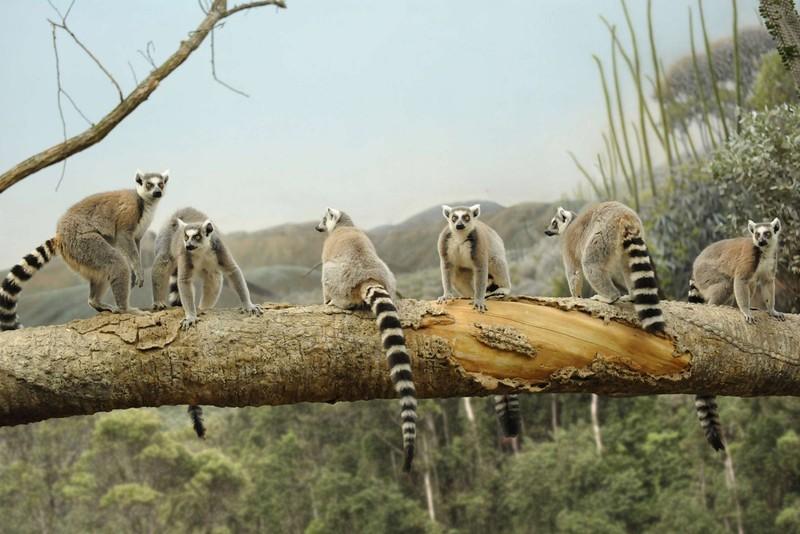 Madagaskar veľký okruh