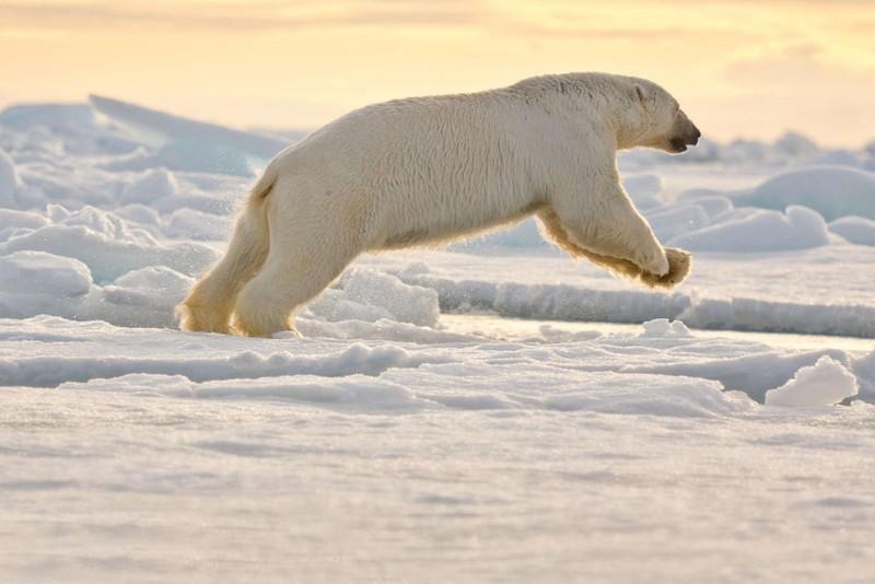 Na Severný pól opäť s BUBO